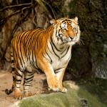 Free Brookfield Zoo Admission!