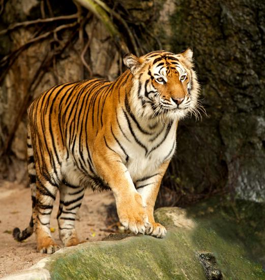Free Brookfield Zoo Admission