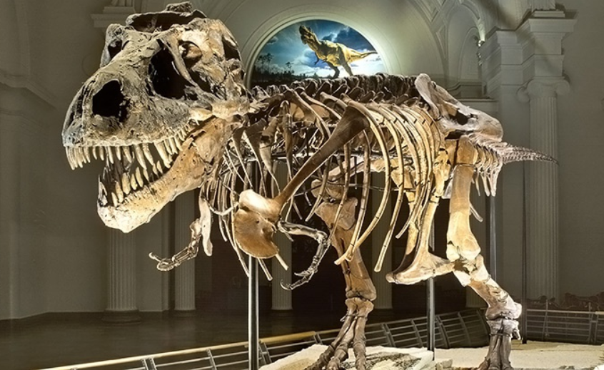 Field Museum Chicago Discount